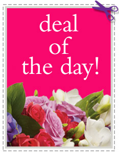 Deal of the Day, picture